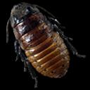 Caca Roach icon