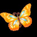 butterfly orange icon